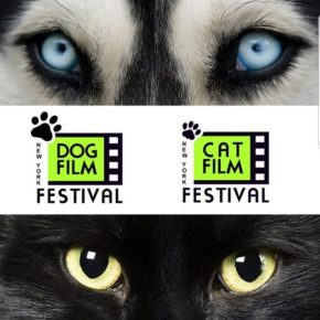 DOG AND CAT FILM FESTIVAL