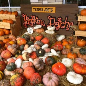 ALL THINGS PUMPKIN AT TRADER JOES!
